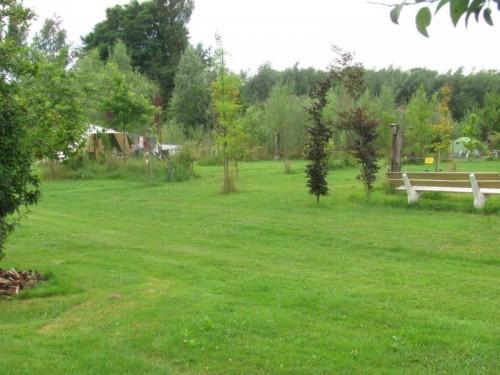 camping de biezen bloem2409 (2)