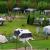 camping nieuw heegt